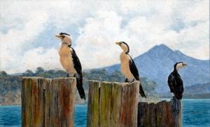 Cormorants by Bob Jager