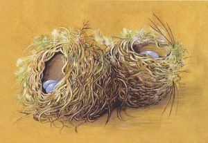 A Study of Two Nests - Sandra Rofe