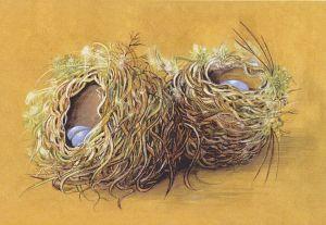 A Study of Two Nests - Sandra Rofe